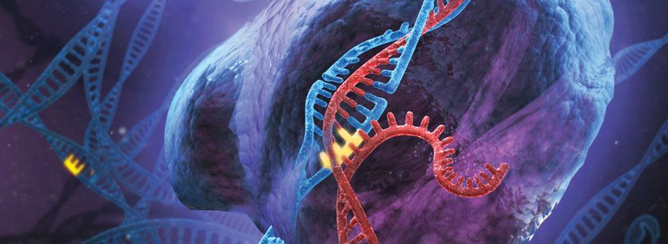 Vers une chirurgie du génome !