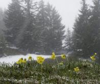 2015-2016, l'hiver le plus chaud jamais enregistré en France