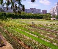 40 % des terres cultivées dans le monde sont en zones urbaines !