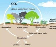 A quel rythme le carbone des sols se renouvelle-t-il ?