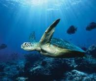 Acidification des océans et réchauffement climatique : un lien sous-estimé !