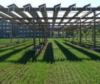 Améliorer l'efficacité énergétique de l'agriculture