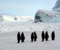 Antarctique : le CO2 aurait été responsable du réchauffement dans le passé