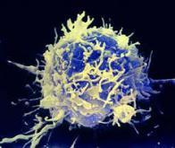 Au palmarès des avancées scientifiques de 2013, l'immunothérapie se taille la part du Lion !