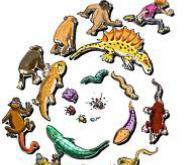 Biologie : l'évolution peut aussi être lamarckienne !
