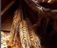Cancer colorectal : seules les fibres végétales protègent !