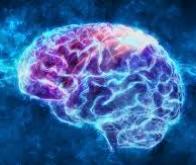 Cancer du cerveau : une molécule intelligente trompe et tue les cellules du glioblastome