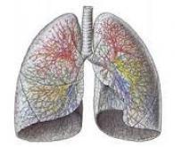 Cancer du poumon : un biocapteur pour le détecter à partir du souffle