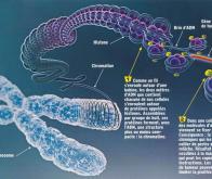 Cancer et épigénétique : le rôle de l'alimentation se confirme