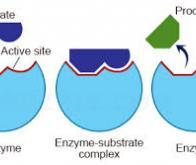 Cancer : la nouvelle voie de recherche prometteuse de l'enzyme ADAR