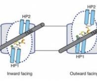 Cerner la molécule transporteuse pour réduire les effets secondaires