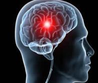 Cerveau : de nouveaux types de cellules découverts
