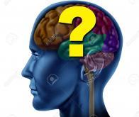 Cerveau : la prise de décision obéit à une logique hiérarchisée...