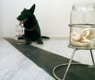 Ces chiens qui détectent le cancer...