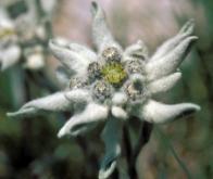 Climat : les plantes des montagnes grimpent de plus en plus haut