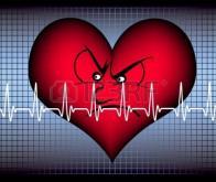 Cœur : la protéine qui donne le rythme identifiée