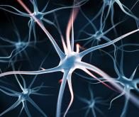 Comment communiquent nos neurones…