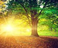 Comment la lumière et le vent modèlent les arbres