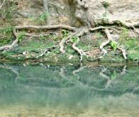 Comment les racines des plantes perçoivent les inondations et y répondent