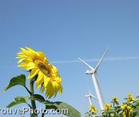 Construction du premier parc solaire et éolien français
