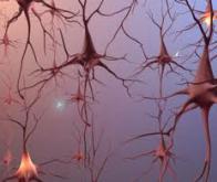Contrôler les neurones par la lumière !