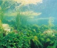 Cultiver des algues sous des panneaux solaires en mer...