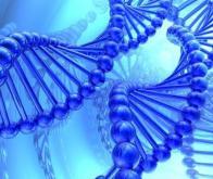 Découverte de 2 variants génétiques associés spécifiquement à la maladie d'Alzheimer