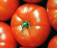 Découverte d'un gène pourrait redonner du goût aux tomates industrielles