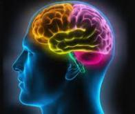 Découverte d'une aire cérébrale impliquée dans les mathématiques