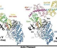 Découverte d'une molécule-clé dans la communication intracérébrale