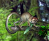 Découverte en Chine du plus ancien primate connu