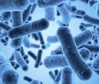 Découverte fondamentale en cancérologie : le lien entre microbiote et immunothérapie