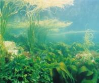 Des algues marines pour réduire l'utilisation des antibiotiques en élevage