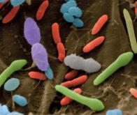 Des bactéries intestinales pour aider à combattre le cancer