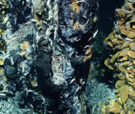 Des bactéries marines dévorent l'hydrogène