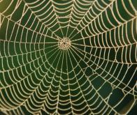 Des chercheurs ont créé une fibre liquide inspirée de la toile d'araignée
