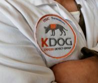 Des chiens renifleurs pour détecter différents cancers !