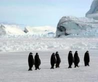 Des chutes de neige accrues amortiraient le réchauffement climatique en Antarctique