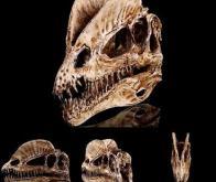 Des molécules d'ADN auraient survécu dans le crâne fossilisé d'un dinosaure