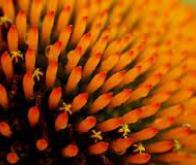 Des nanocapteurs pour détecter les antibiotiques dans le sang