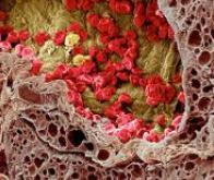 Des nanoparticules contre le vieillissement