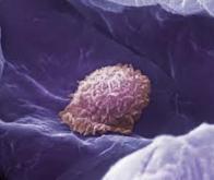 Des nanoparticules qui savent leurrer le système immunitaire