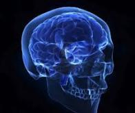 Des neuroscientifiques ont tracé le cheminement d'une pensée à travers le cerveau