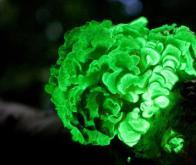 Des plantes bioluminescentes pour éclairer nos villes !