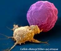 Des scientifiques mettent au point des cellules -tueuses- de cancer
