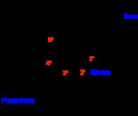 D'où viennent les premières molécules d'ARN ?