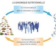 La preuve en est faite : la durée de vie est liée à la qualité de l'alimentation