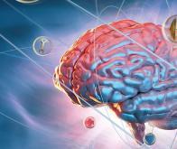 Cerveau et immunité : un monde nouveau s'ouvre pour la Recherche !