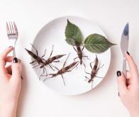 Comment l'Humanité devrait se nourrir dans l'Avenir : Gastronomes s'abstenir !