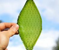La photosynthèse artificielle ouvre la voie vers l'énergie du Futur